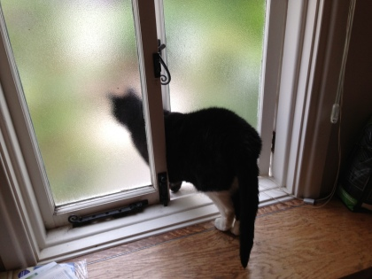 Gertrude Escaping